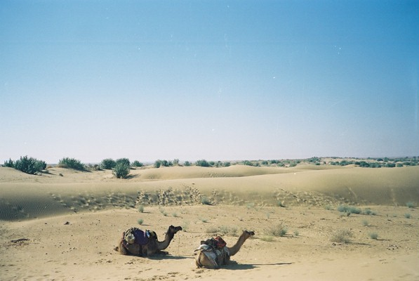 The rides taking a rest during a camel safari out of Jaisalmer