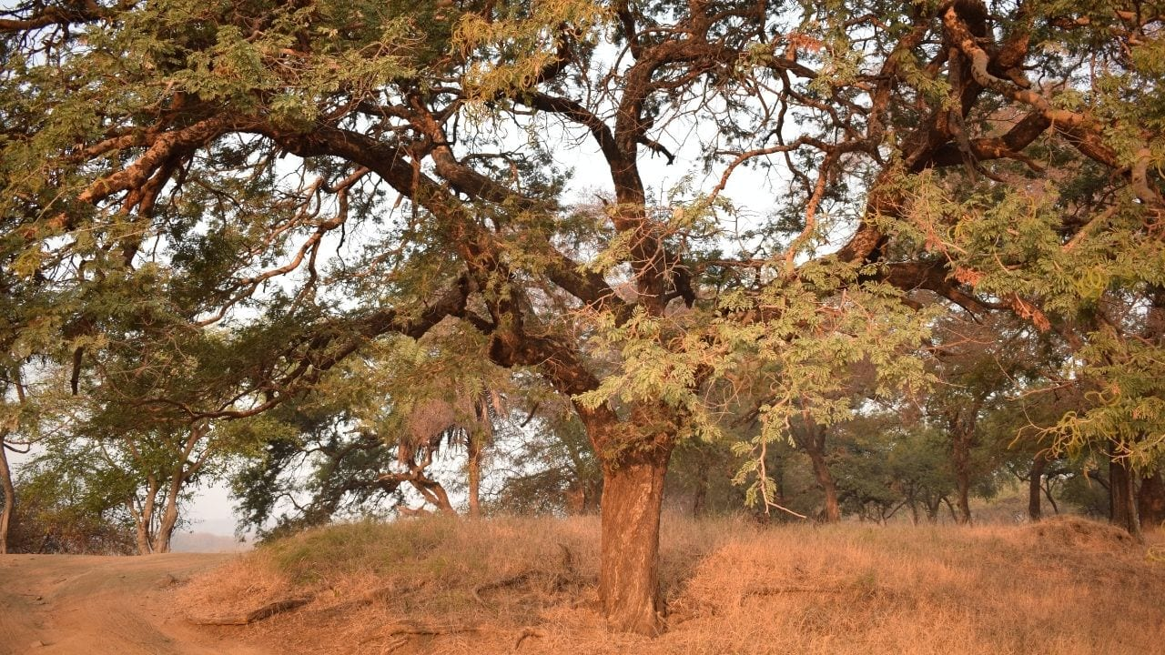 Ranthambore Park in India