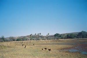 tigerless-safari2