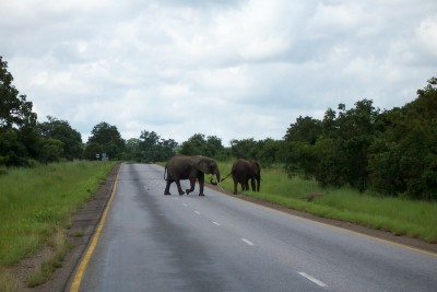 Elephants crossing the road as I was cycling in Africa