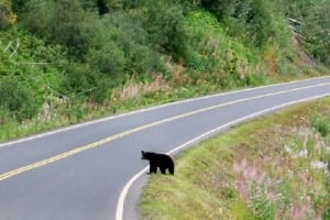 Cycling from Kinaskan to Bell 2 in Canada | Bears on a bike tour