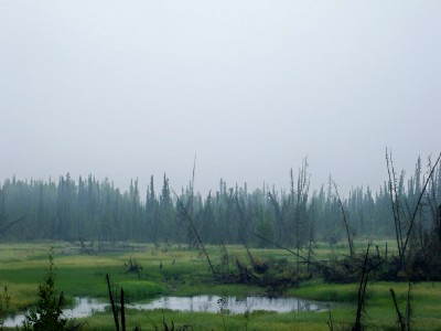An almost prehistoric landscape as seen cycling from Alaska to Argentina