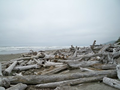 Bleached logs washed on the shores of Kalaloch Beach