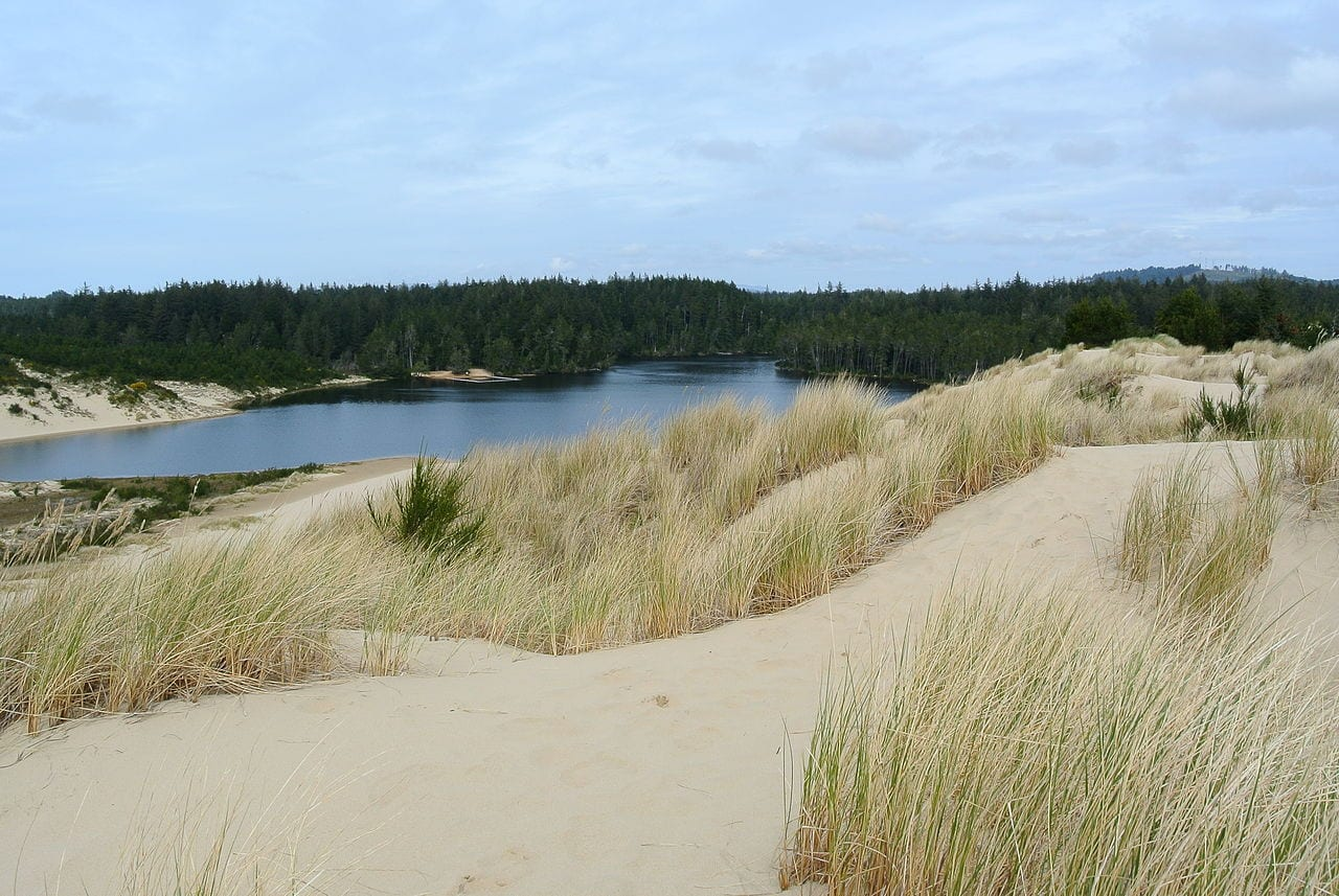 The Dunes at Honeyman Memorial State Park