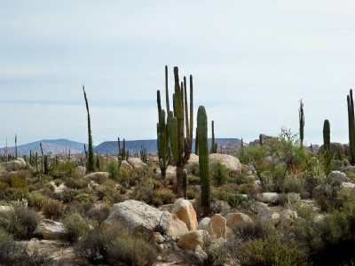 Cycling from San Agustin to Catavina in Baja California - Bike Touring