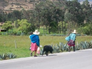 Leading a pig to market in Peru