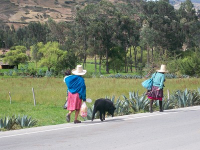 Two women leading a pig to market in Peru