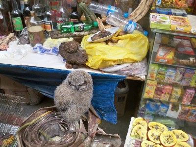 An owl in the market at Huamachuco