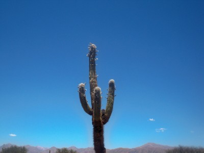 A cactus growing in Argentina