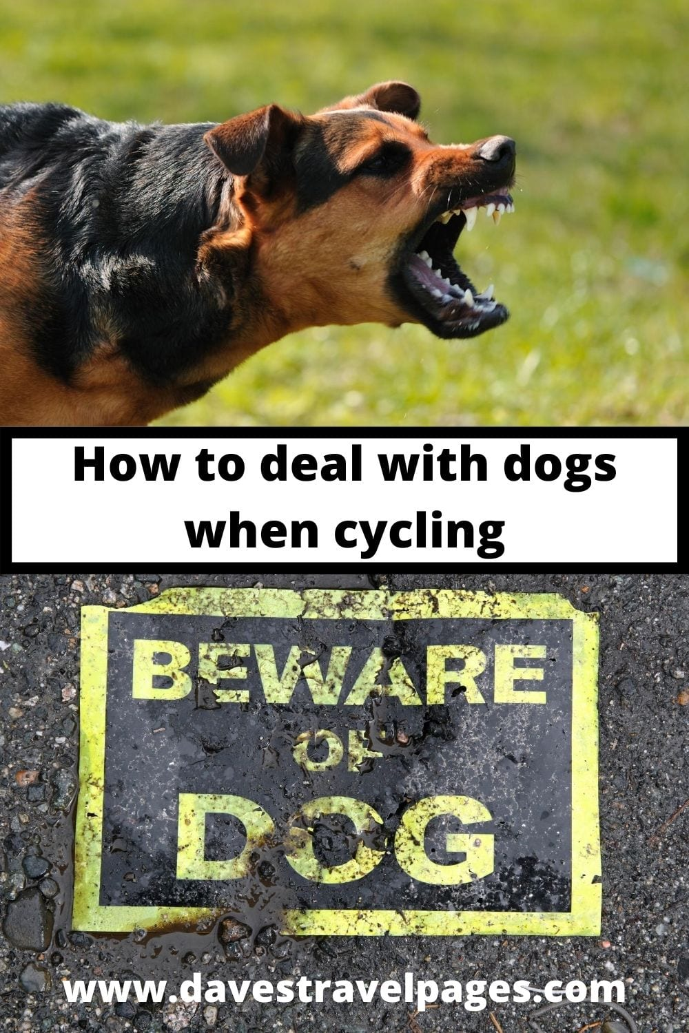 How to deal with aggressive dogs on a bicycle tour - Aggressive dogs can be a stressful and somewhat unnerving experience at first. The sight and sound of an aggressive dog running up to your bike, barking and snarling makes you realise just how exposed you are on a bike tour. Here is how to deal with aggressive dogs.