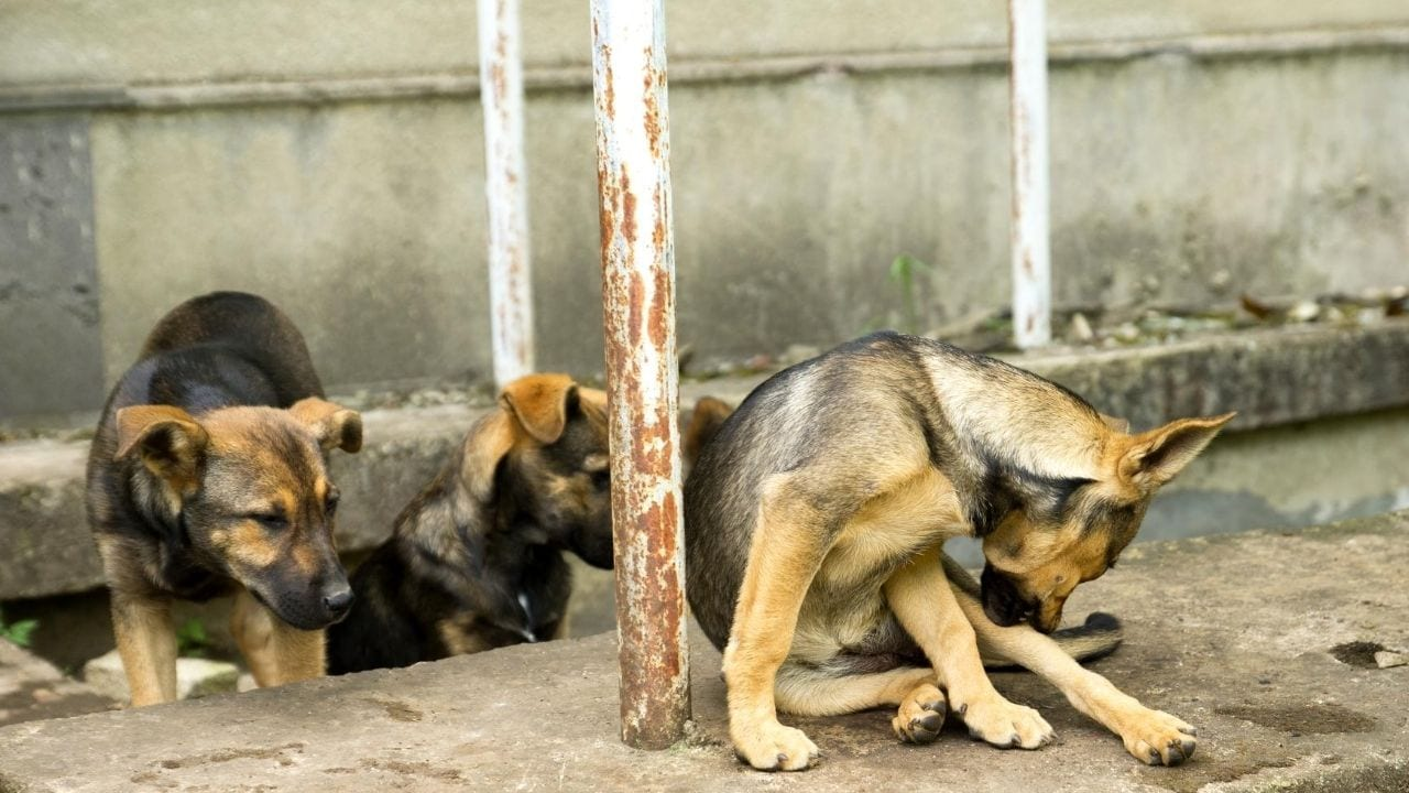best defense against aggressive dogs