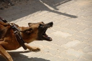 How to deal with aggressive dogs
