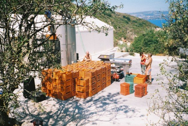 Time in Kefalonia working at a winery