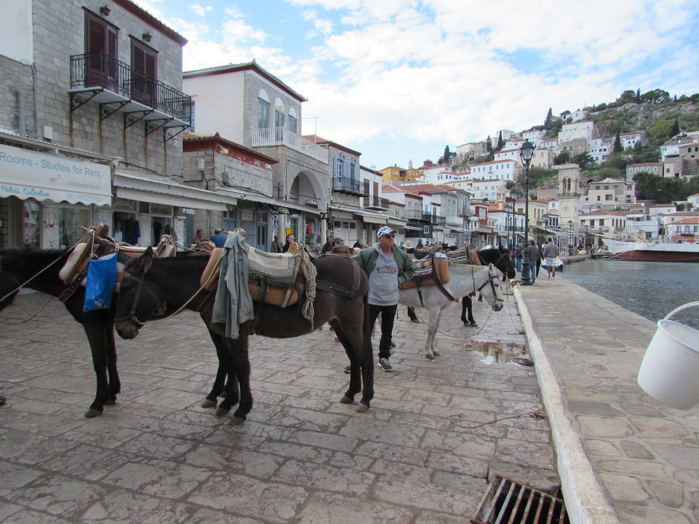 Donkeys on the Greek island of Hydra