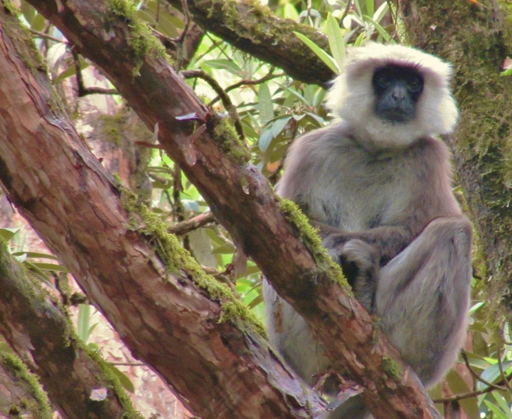 You may see monkeys during your trip to Nepal