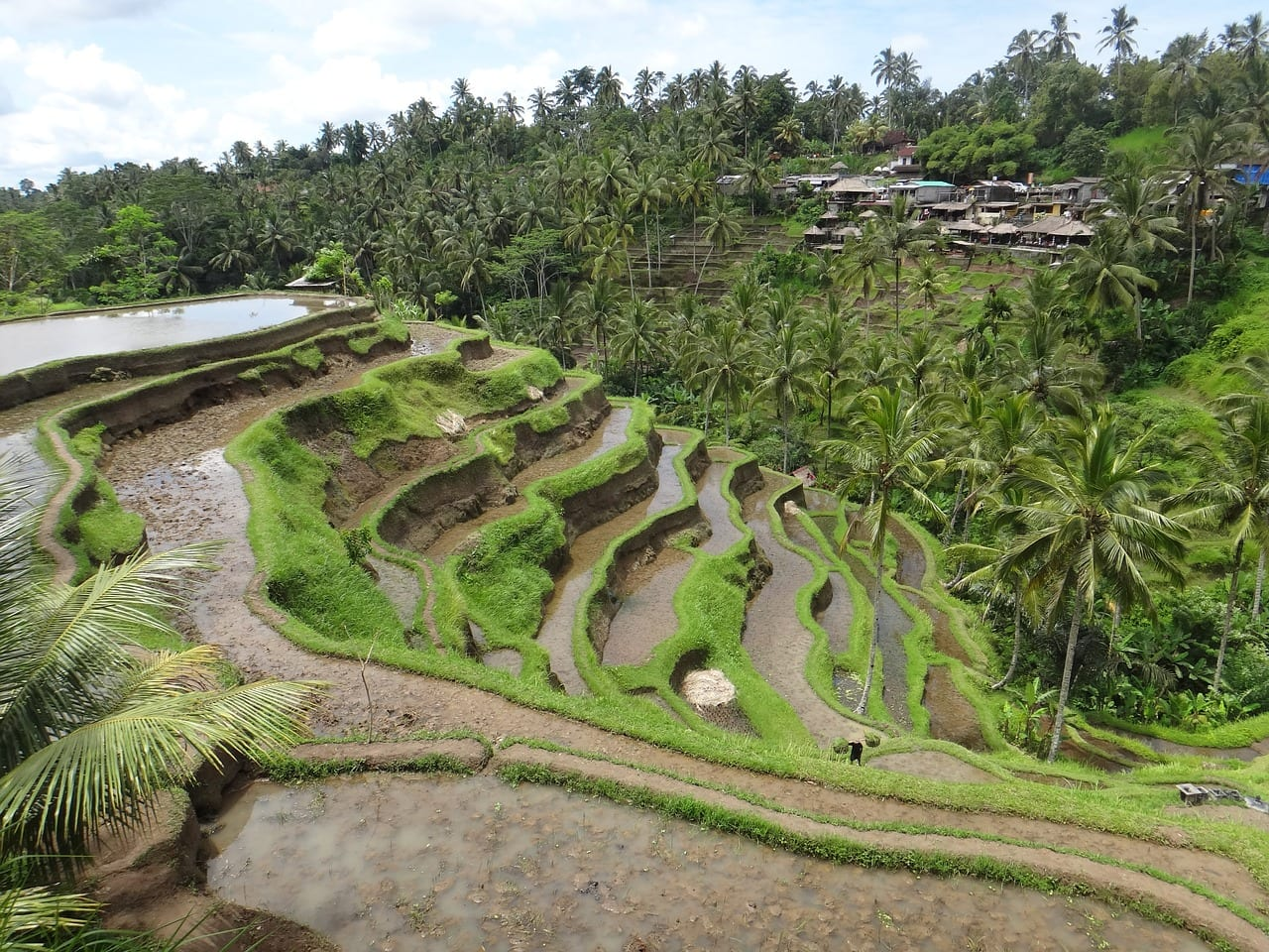 Visit the Bali rice terraces for some spectacular photos!