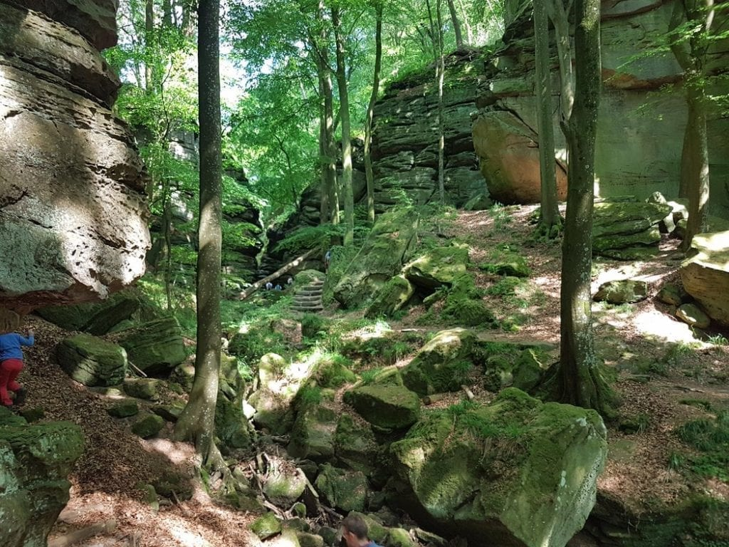 A green oasis in the Mullerthal of Luxembourg
