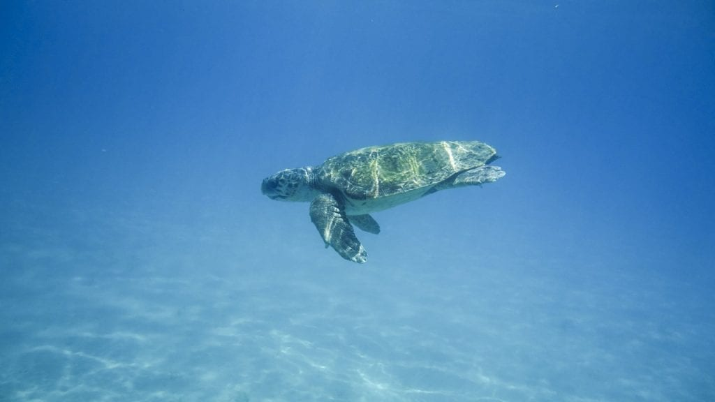 Sea turtles on Zakynthos