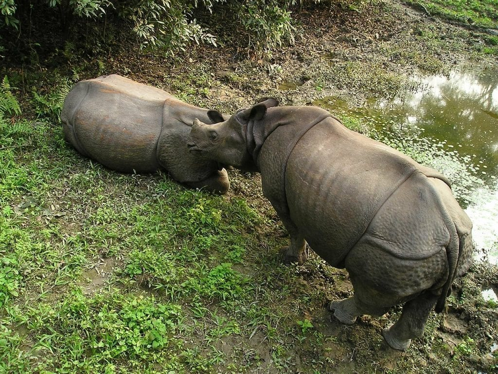 Rhinos in Chitwan National Park in Nepal