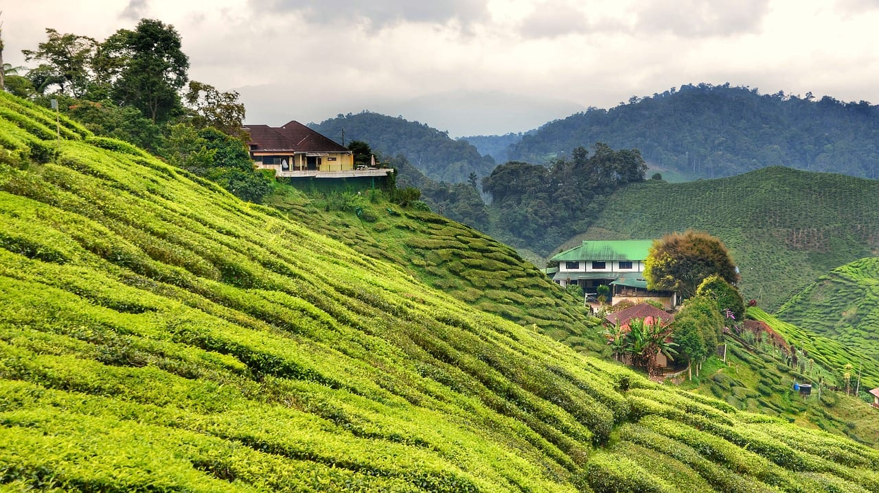 There's greenery everywhere in the The Cameron Highlands, Malaysia