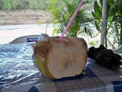 Taking a refreshing drink from a coconut on my Mexico bike ride