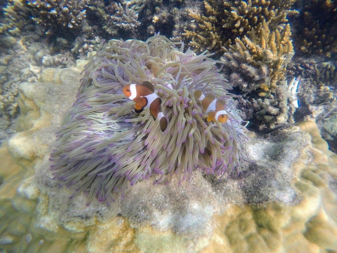 Finding Nemo on Kapas Island Malaysia