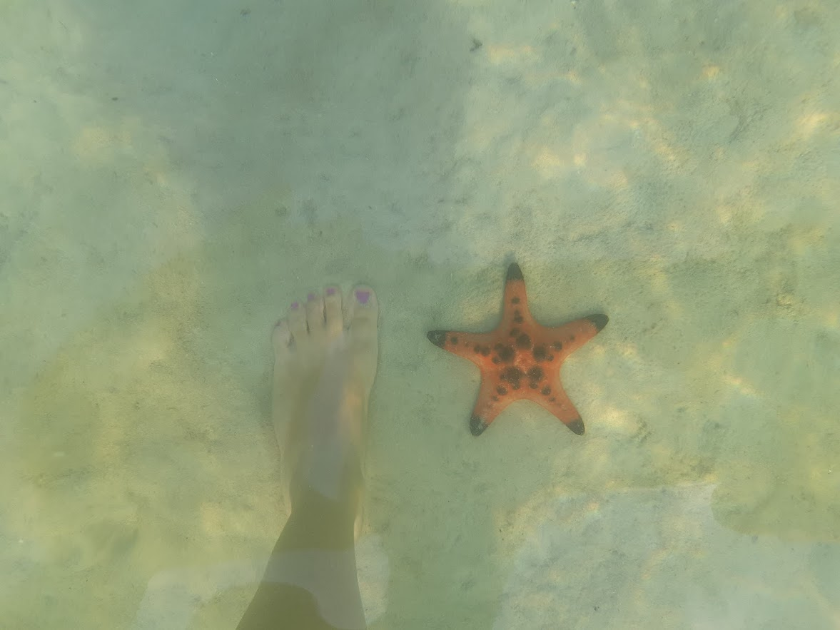 Starfish beach in Phu Quoc