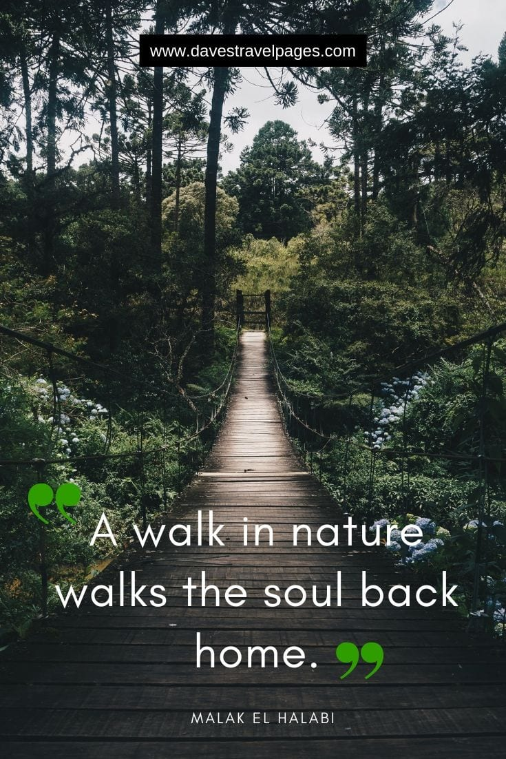 "Great quotes - ""A walk in nature walks the soul back home."""