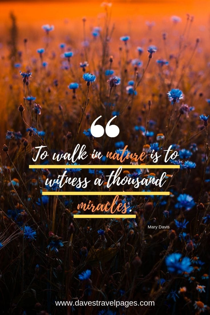 "Walking quotes - ""To walk in nature is to witness a thousand miracles."""