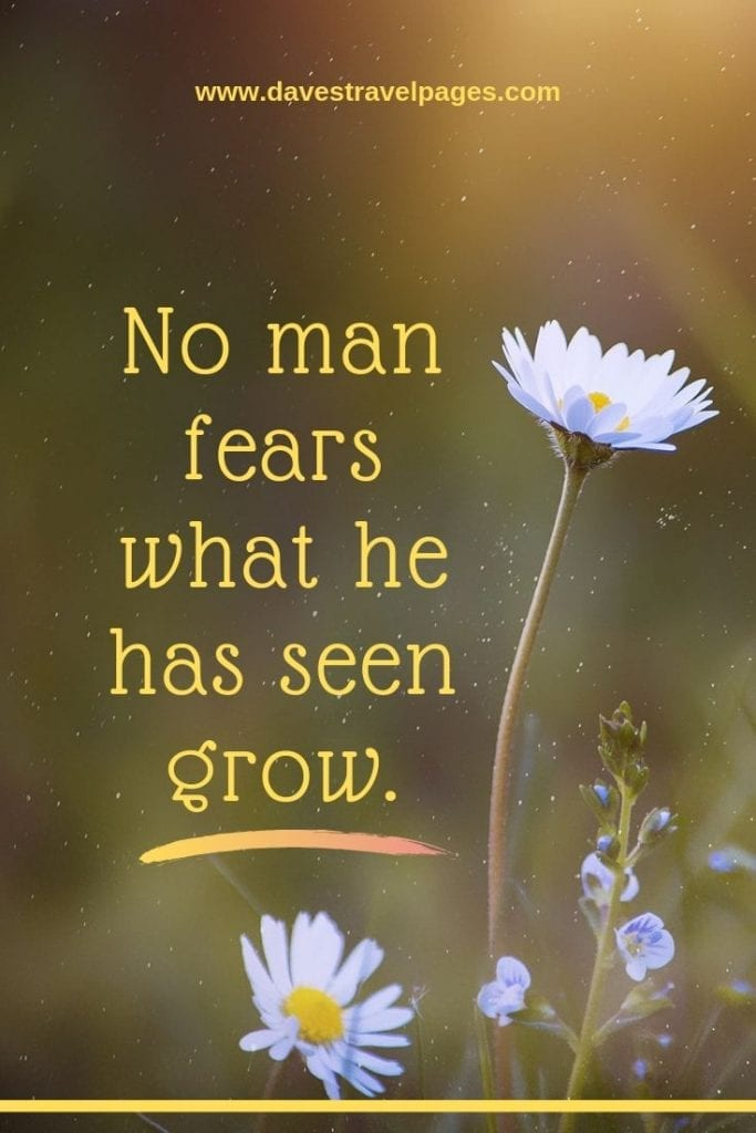 No man fears what he has seen grow. - African Proverb