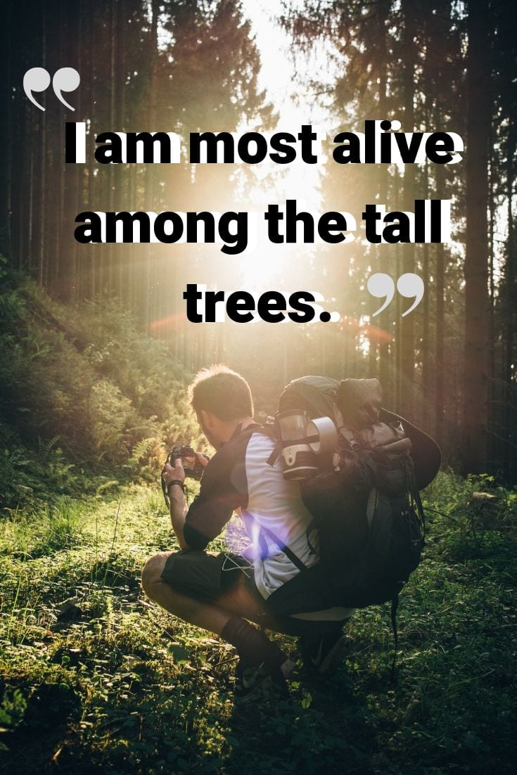 "Camping and nature quotes - ""I am most alive among the tall trees."""