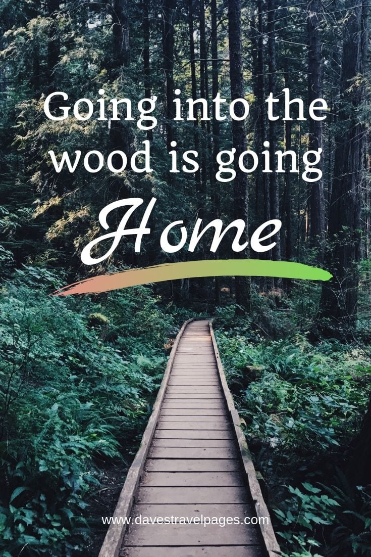 "Forest and Woods Quotes - ""Going into the wood is going home."""