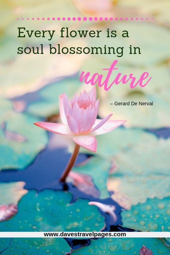 """Beautiful nature quotes - """"Every flower is a soul blossoming in nature."""" – Gerard De Nerval"""