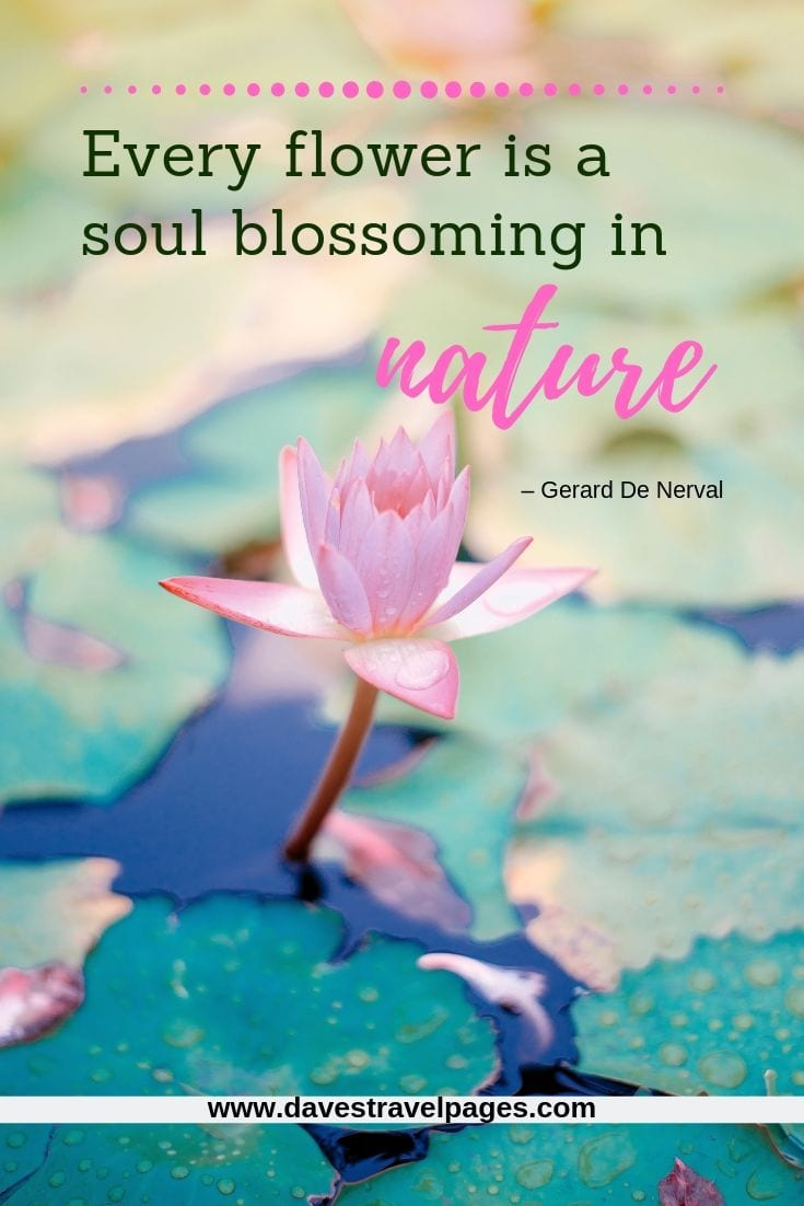 "Beautiful nature quotes - ""Every flower is a soul blossoming in nature."" – Gerard De Nerval"