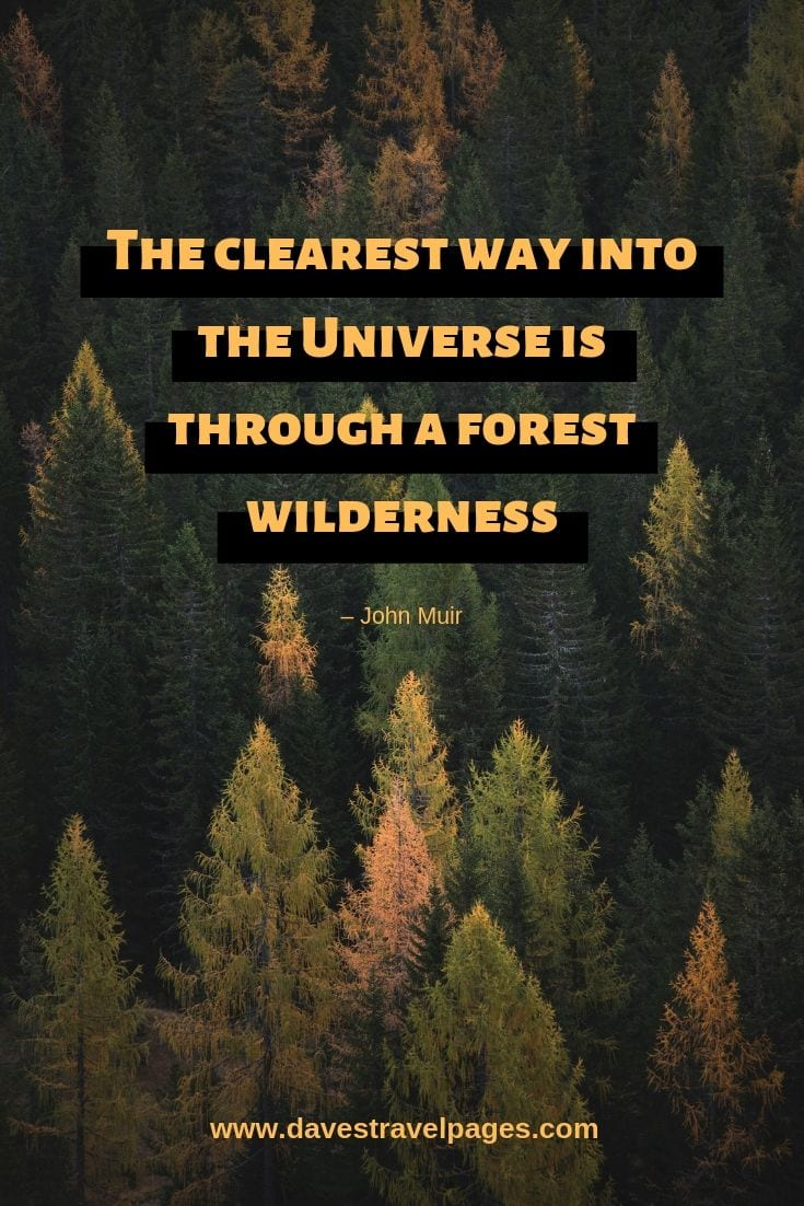 "Wilderness Quotes - ""The clearest way into the Universe is through a forest wilderness."" – John Muir"
