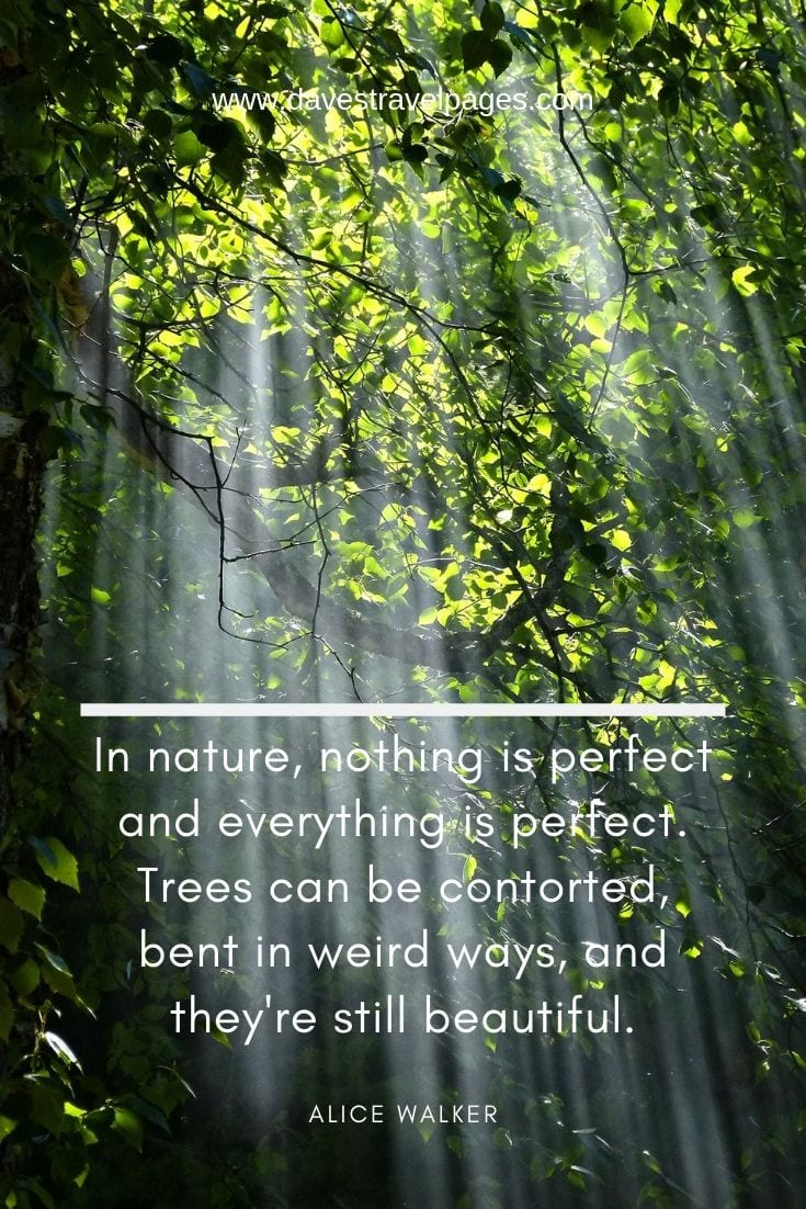 Beautiful nature and outdoor quotes: In nature, nothing is perfect and everything is perfect. Trees can be contorted, bent in weird ways, and they're still beautiful.