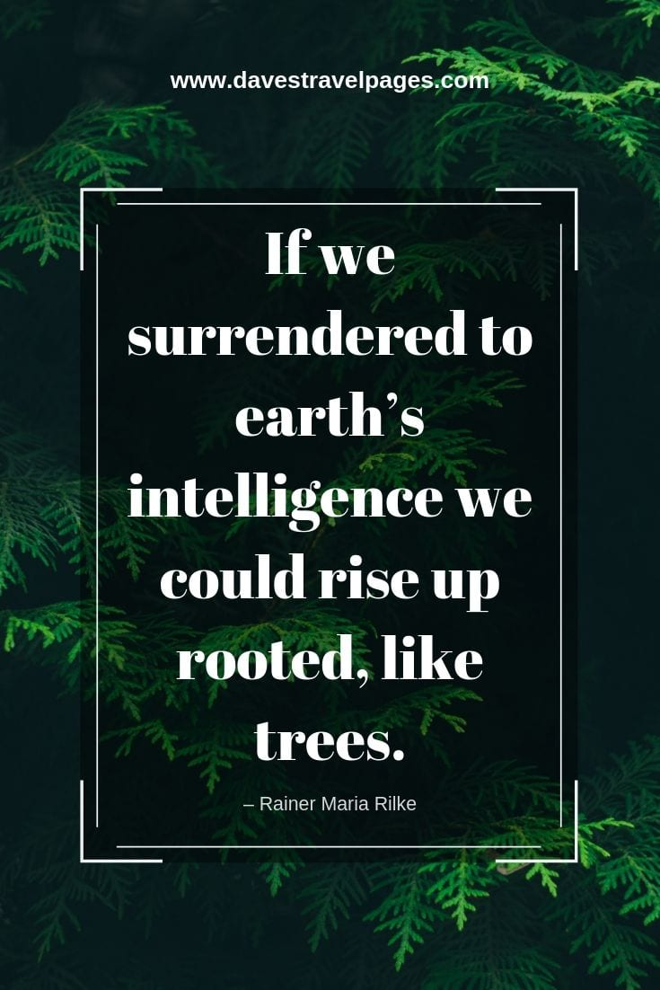"Best Nature Quotes - ""If we surrendered to earth's intelligence we could rise up rooted, like trees."" – Rainer Maria Rilke"