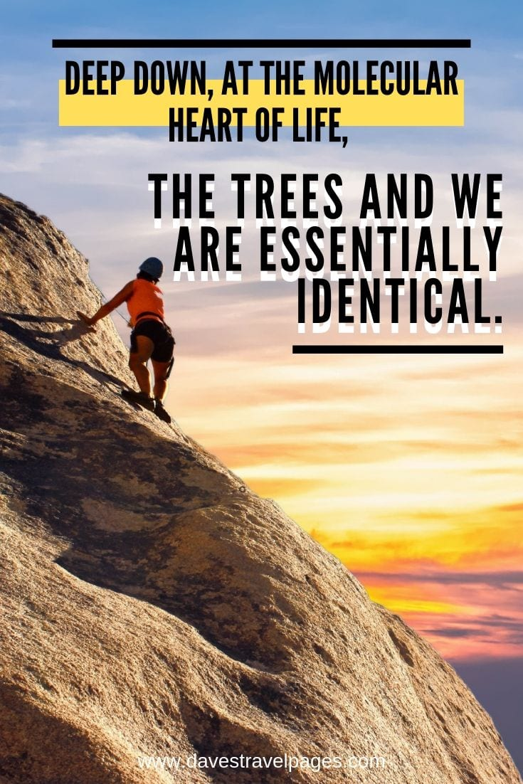"Carl Sagan Quote - ""Deep down, at the molecular heart of life, the trees and we are essentially identical."""
