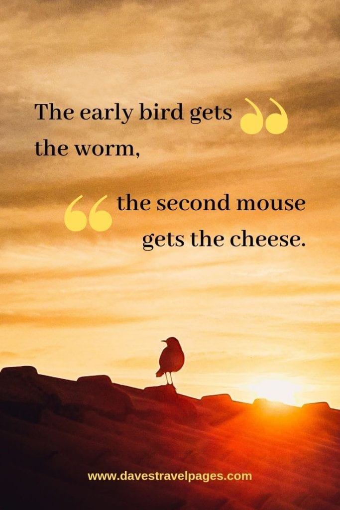 Funny nature quotes: The early bird gets the worm, the second mouse gets the cheese.