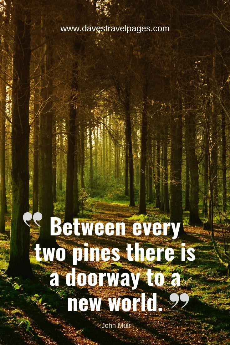"Forest quotes - ""Between every two pines there is a doorway to a new world."""