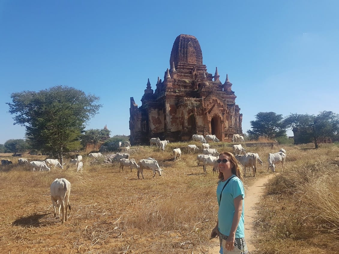 Animals wandering among the temples of Bagan