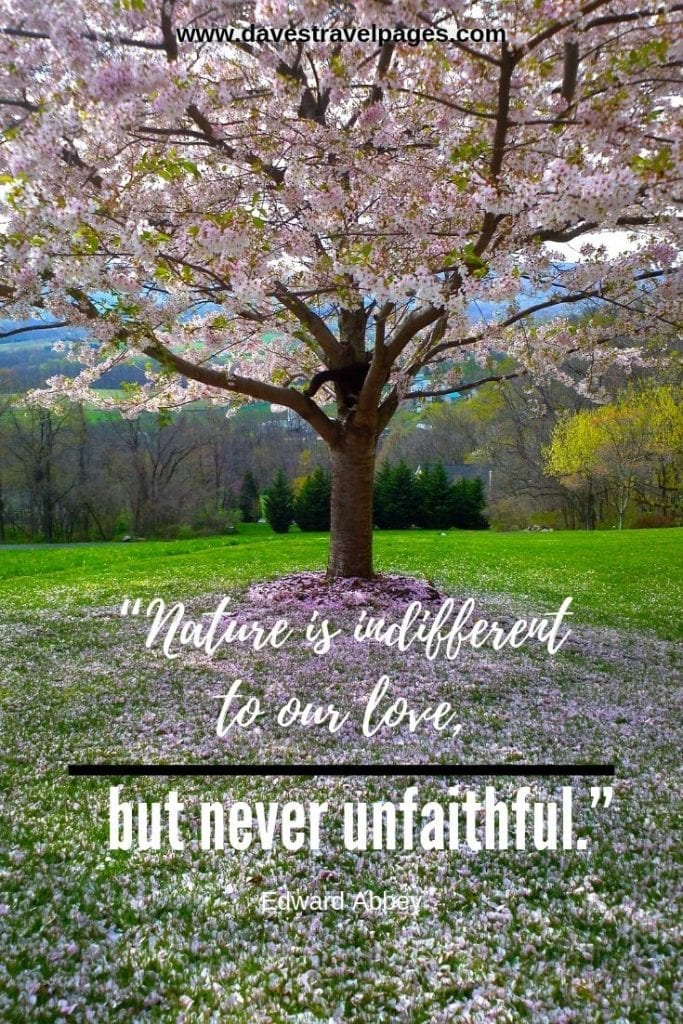 """Love and nature quotes: """"Nature is indifferent to our love, but never unfaithful."""" – Edward Abbey"""