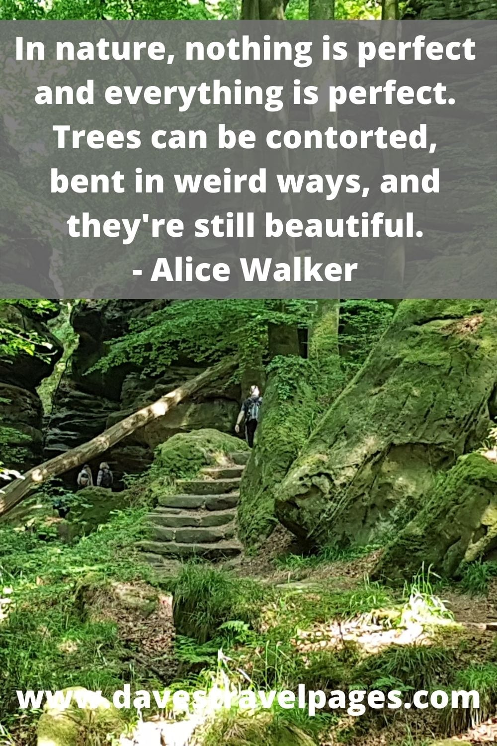 In nature, nothing is perfect and everything is perfect. Trees can be contorted, bent in weird ways, and they're still beautiful. Alice Walker Quotes about the nature