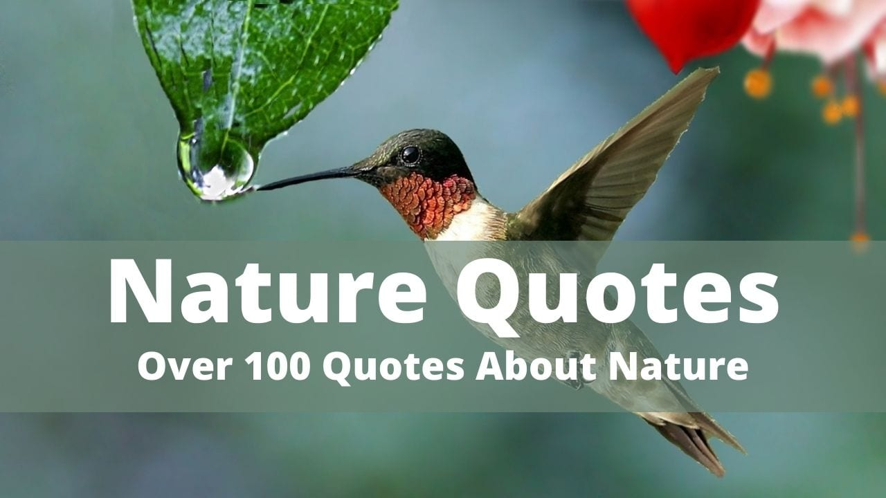 Collection of the best nature quotes and captions