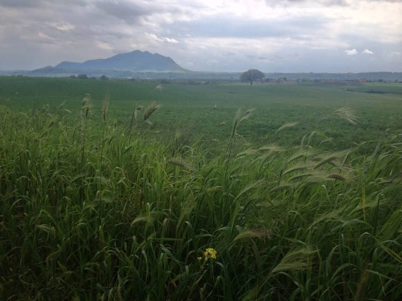 Green fields of grass in Italy