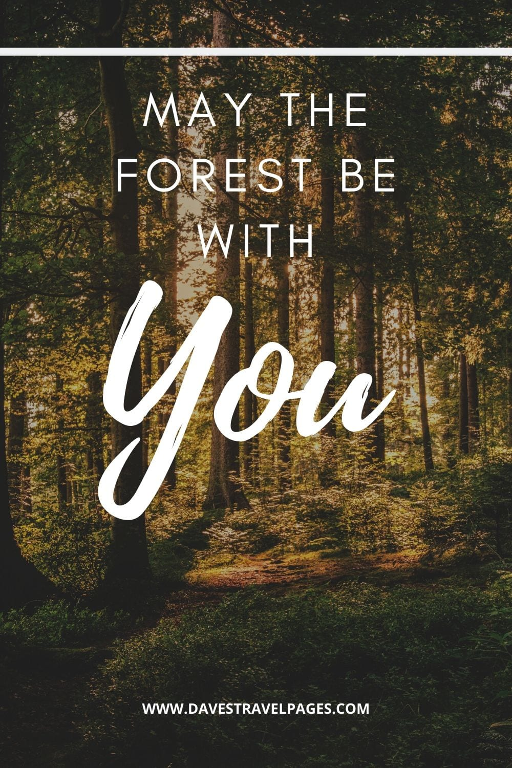 "Outdoor captions: ""May the forest be with you."""
