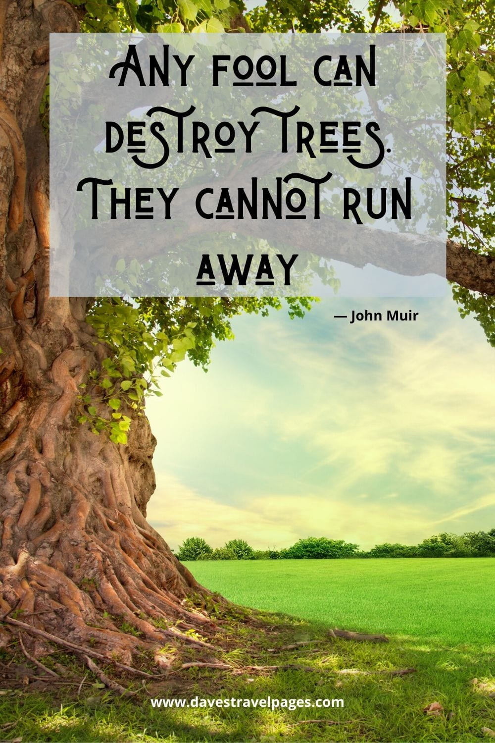 """Quotes about nature: """"Any fool can destroy trees. They cannot run away."""" ― John Muir"""