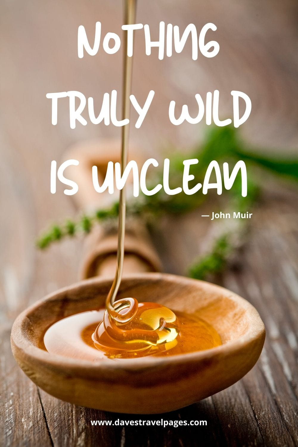 """Well known John Muir Quote: """"Nothing truly wild is unclean."""""""