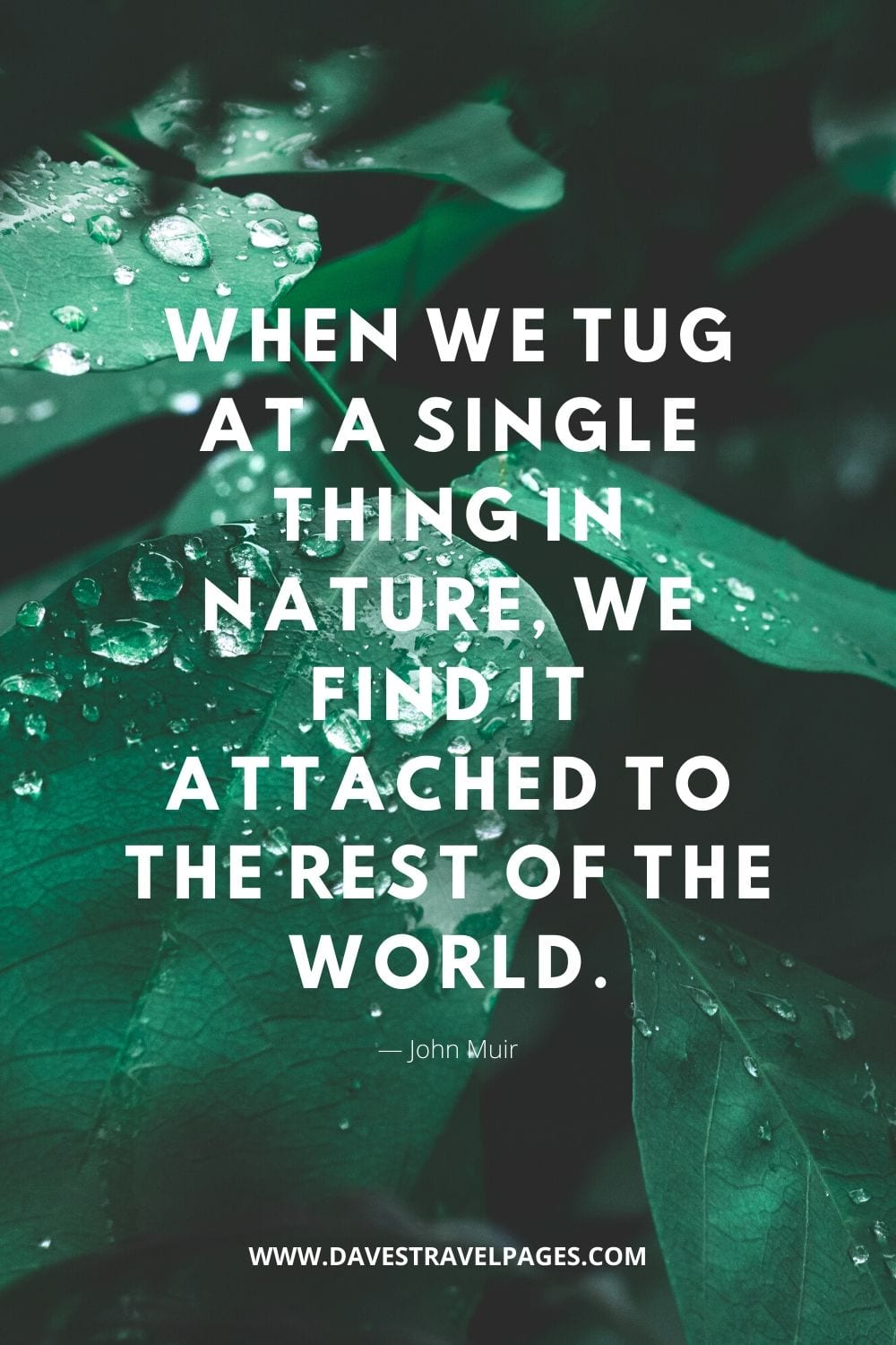 """Nature quote by John Muir: """"When we tug at a single thing in nature, we find it attached to the rest of the world."""""""