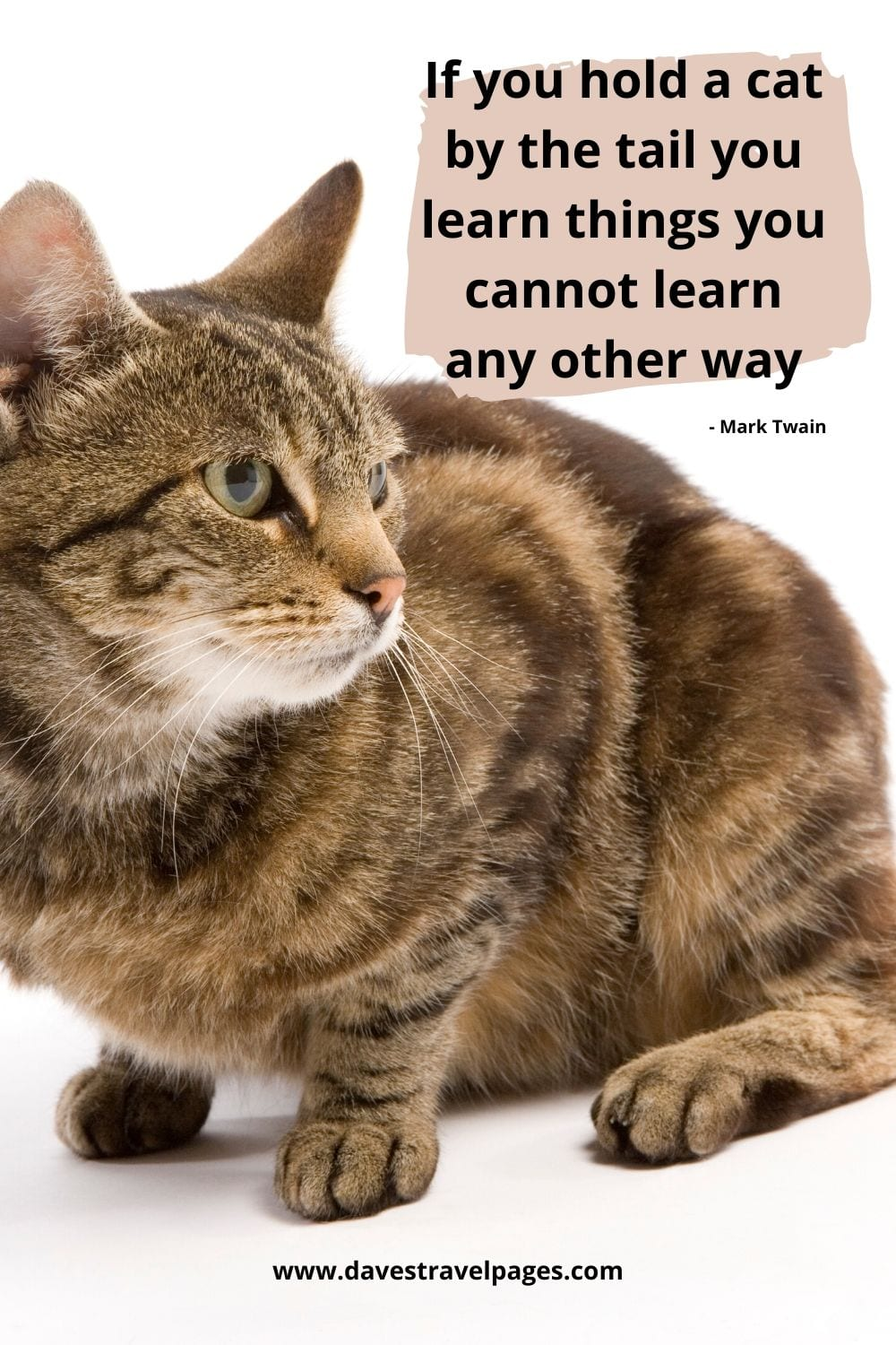 Mark Twain - If you hold a cat by the tail you learn things you cannot learn any other way. Mark Twain